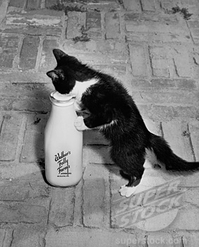 Kitten drinking milk out of a bottle